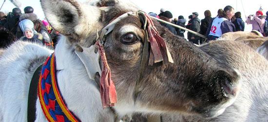 День оленевода в Салехарде